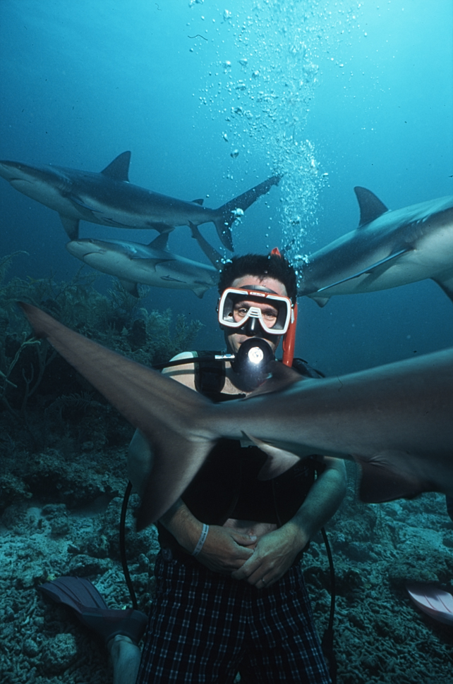 Shark Feeding, Nassau Bahamas.jpg - Shark Feeding
