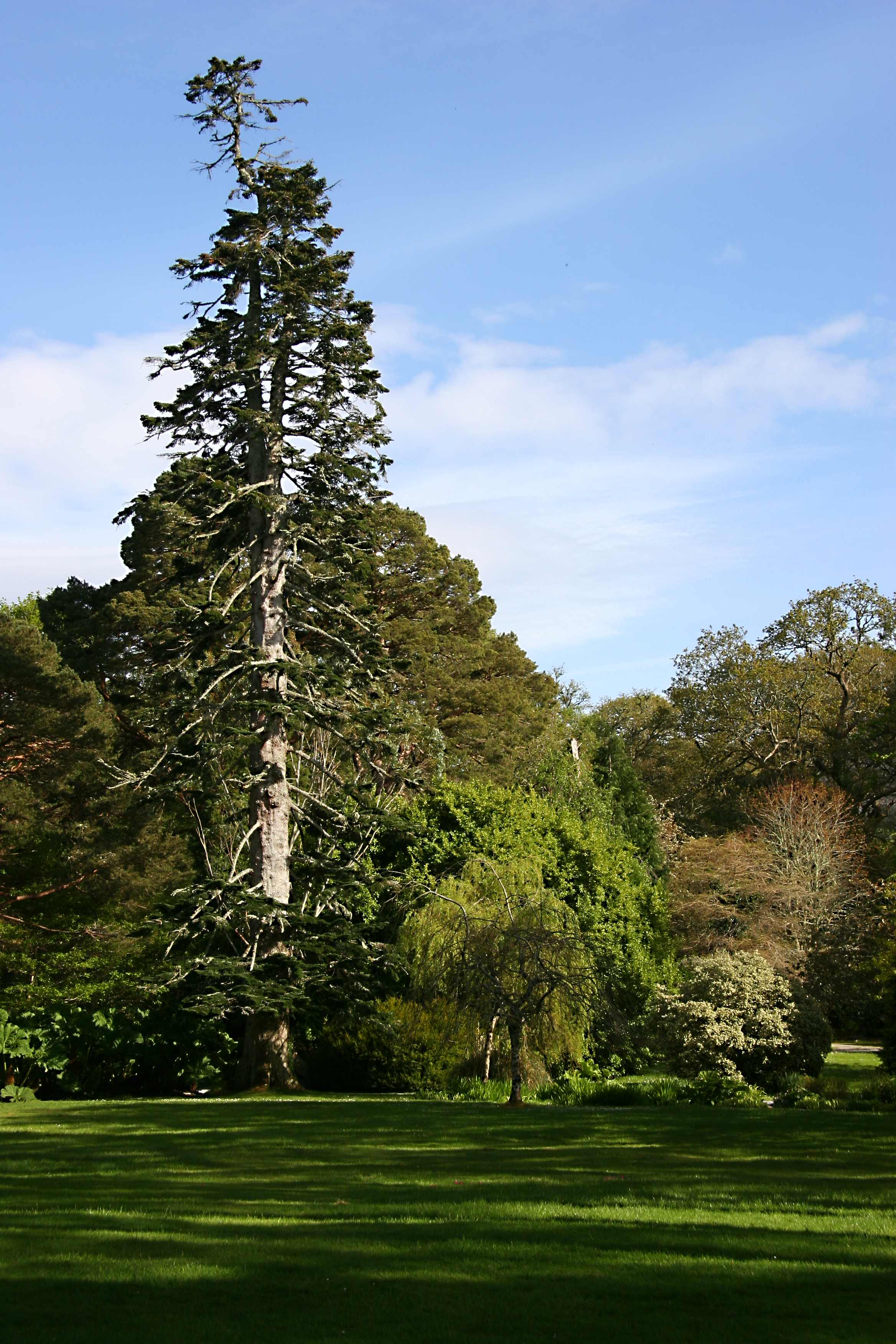 Mansion grounds Ireland 3.jpg